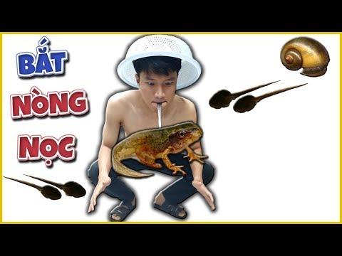 Tony | Lần Đầu Bắt Nòng Nọc Và Ốc Bưu Về Ăn - Catch Snails & Tadpole - Thời lượng: 13 phút.