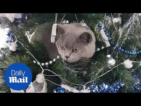 Όταν η γάτα ...  στολίζει το Χριστουγεννιάτικο δέντρο