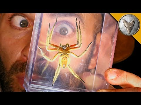 Coyote Peterson Catches a Terrifying Jungle