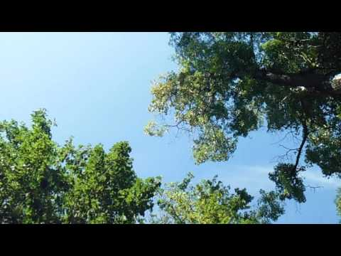 Video nonstop Hare Krishna mahamantra  # 1 download in MP3, 3GP, MP4, WEBM, AVI, FLV January 2017