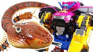 Video Terrible King Cobra appeared in Tayo town! Go Miniforce 4 combine robot!! - DuDuPopTOY MP3, 3GP, MP4, WEBM, AVI, FLV September 2018