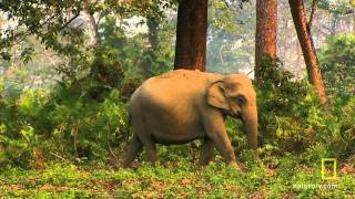 Nonton 'Baby Steps' - Clip from Wild India - Elephant Kingdom Film Subtitle Indonesia Streaming Movie Download