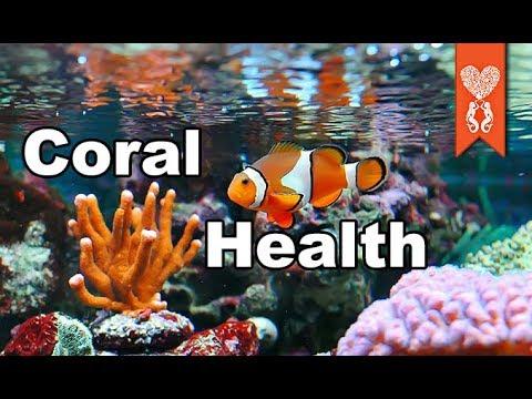 why random corals die in your aquarium_Akvárium