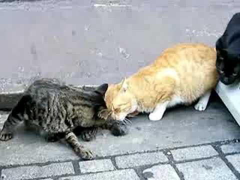 「[動物]野良猫の尻尾にマタタビをかけてみた。」のイメージ