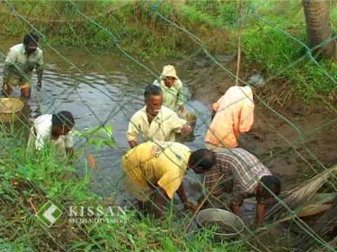 organic prawn cultivation in Kerala