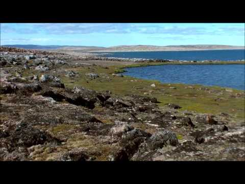 Polar Bears A Summer Odyssey 2 الملحمة الصيفية للدبب القطبية
