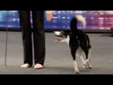 Gin, the Dancing Dog in Britain's Got Talent