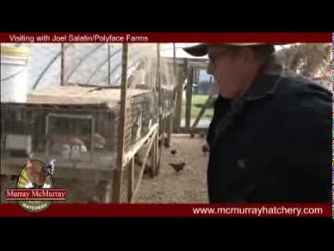 Murray McMurray Hatchery Visits Joel Salatin and Polyface Farms