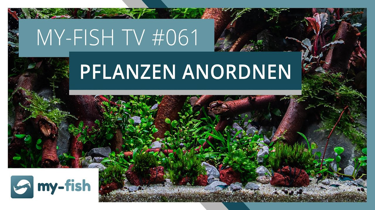 my-fish TV - Deine Nr. 1 Anlaufstelle für alle Themen rund um die Aquaristik 3