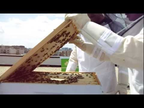 Urban Beekeeping: # 28 Opening the hive, inspecting, and observing proper frame patterns!