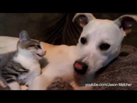 고양이와-놀고-싶은-강아지들-다시보기