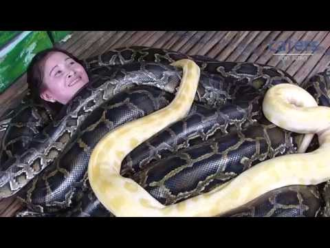 Zoo In The Philippines Offers Snake Massage