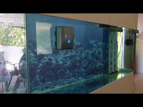 RoboSnail automatic aquarium glass cleaner_Akvárium
