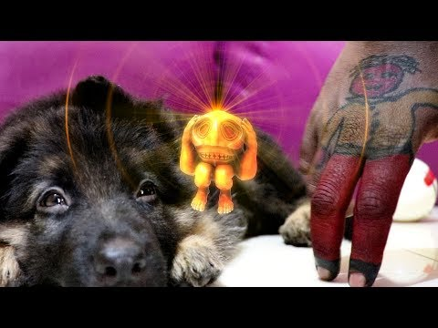 Temple Run Blazing Sands In Real Life || Cute Doggy