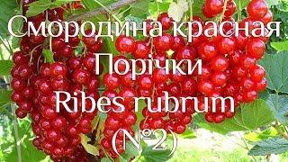 Поричка (№2)