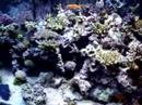 Denadai, obrigado pela oportunidade de te conhecer pessoalmente. Seu reef realmente é um dos mais bonitos e bem cuidados que já vimos !Abraços,Anderson e Carol