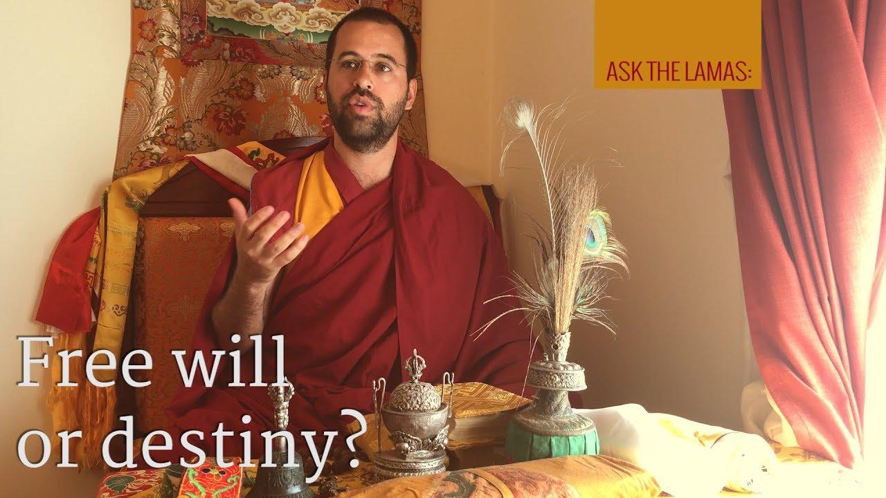 Free will or destiny?
