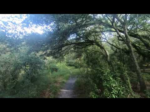 Horseback/Trail Riding in South Florida - Tree Tops Park 7.28.18