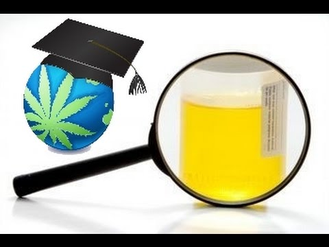 How To Pass A Urine Test For THC (Cannabis)