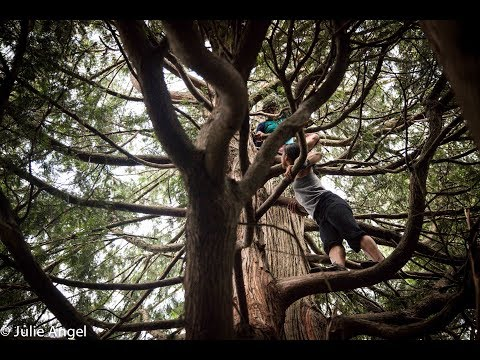 Outdoor Natural Movement – Women and Trees