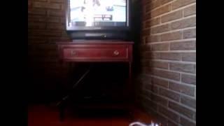 """Laika viendo """"El encantador de perros"""" - YouTube"""