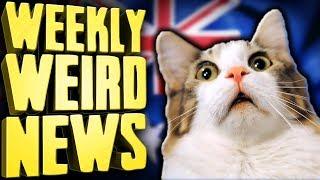 Australia's Bold Plan to Kill 2 Million Cats - Weekly Weird News