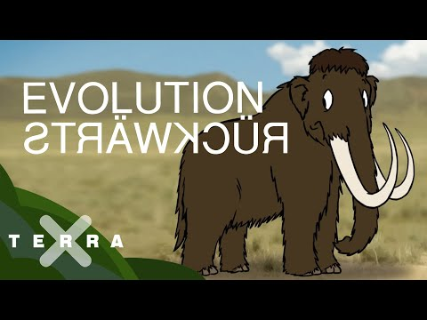 So könnten Mammuts zum Leben erweckt werden