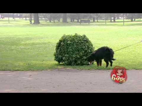 Köpeklere Kamera şakası