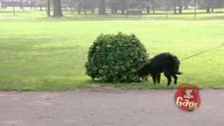 JFL Hidden Camera Pranks&Gags: Ultimate Dog Joke