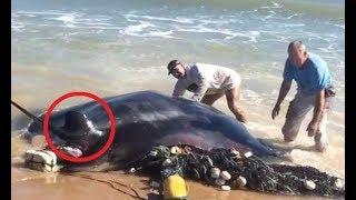 22 Deadliest Aquatic Apex Predators by Epic Wildlife