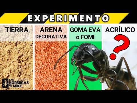 EXPERIMENTO con HORMIGAS ¿Qué Suelo Les Gusta Más?  Las Hormigas de Mike