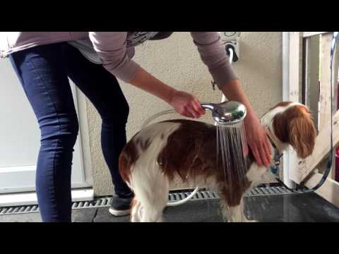 Washing Dogs With An Outdoor Warm Water Dog Shower