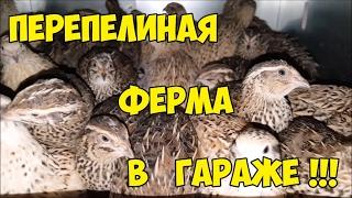 -4bAVEIztw4