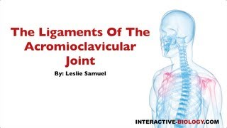 078 The Ligaments Of The Acromioclavicular Joint