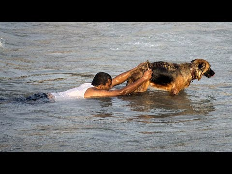 These 10 Heroic Animals That Saved the Day