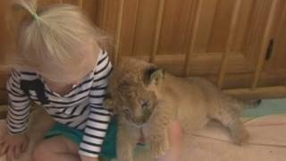 Toddle's Pet Lion - Too Cute!