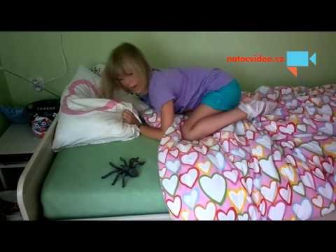 Niki a Naty, utečenec Pavouk Pepa.