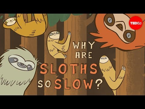 Why Sloths Are So Slow