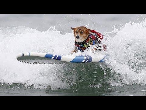 Καλιφόρνια: Εντυπωσιακός ο 10ος ετήσιος διαγωνισμό σέρφινγκ για σκύλους