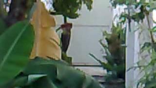 Flor De Bananeira Beija Flor
