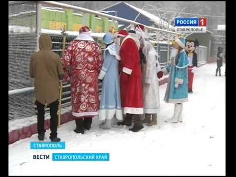 Слет Дедов Морозов СГТРК