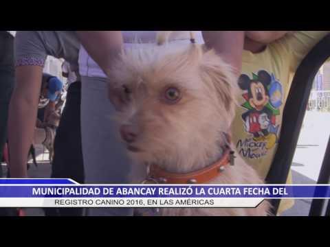 MUNICIPALIDAD DE ABANCAY REALIZÓ LA CUARTA FECHA DEL REGISTRO CANINO
