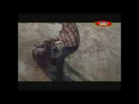 Los Destructores en Huehuetlan puebla el Chico