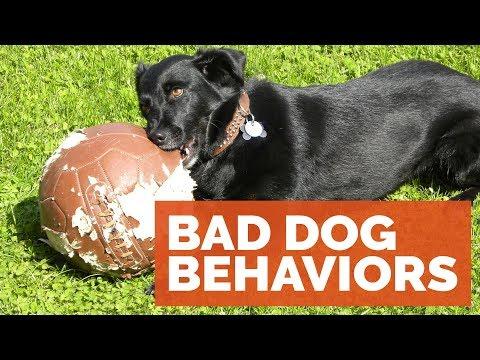 Michael Ellis on Bad Behavior in our Dogs