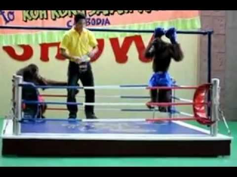 """monkey boxing in margosatubig""  video by jasper reales"