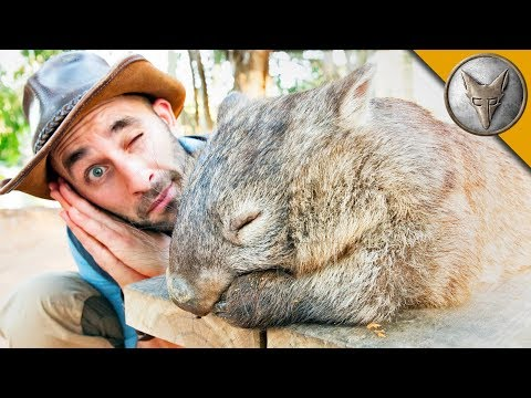 DON'T WAKE the WOMBAT?!