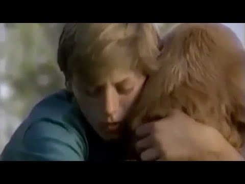 Homeward Bound: The Incredible Journey (1993) - TV Spot