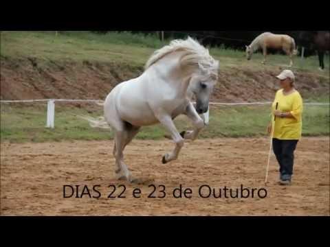 CURSO DENISE BICCA EM OUTUBRO 2008