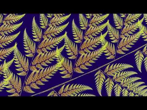 2D IFS Fractal : Fern Zoom revisited