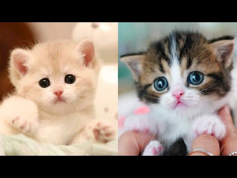 Baby Cats - Cute and Funny Cat Videos Compilation #27   Aww Animals